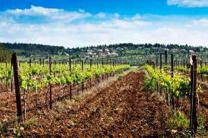 wine-tasting-and-touring-in-israel